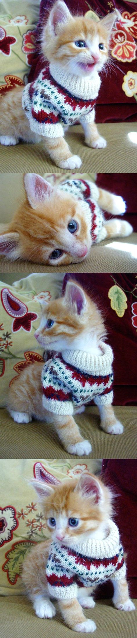 Kitty In a Sweater...@Madeline Elrod ...we need  a few of these...sweaters, not cats.
