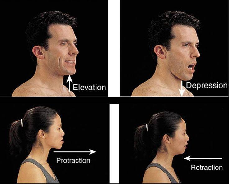 Resultado de imagen de elevacion y depresion anatomia