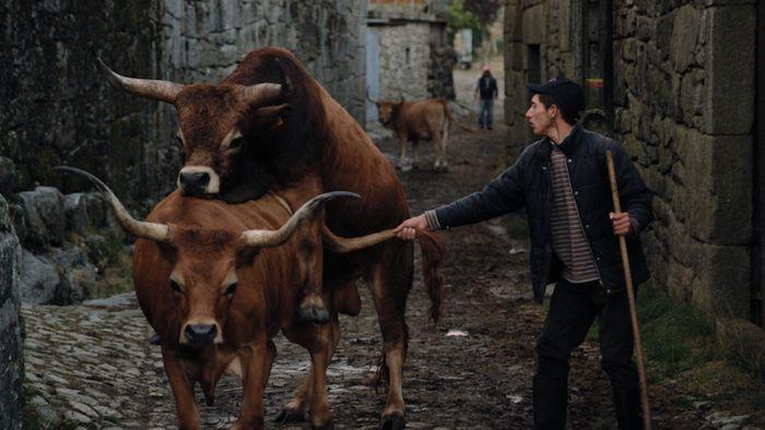 Le film Volta à Terra, « retour à la terre », en portugais, réalisé par Joao Pedro Placido, vient de sortir en salle. Il est un hymne à une vie rurale en accord avec la nature, les animaux et les hommes. Une bouffée d'air pur.   Uz est un hameau montagnard situé dans le nord du Portugal, près de Braga. Vidé par l'émigration, le village ne compte plus que quelques dizaines de paysans dont Daniel, un jeune berger, heureux de sa condition. « Ce n'est pas un film d'action », explique le réali...