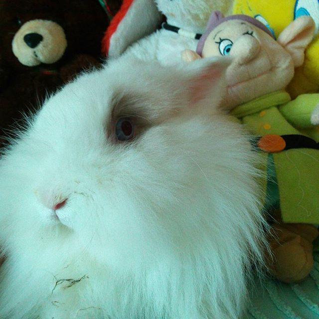 #Trilly #conigliettanana #bunny #rabbit #coniglionano #coniglio #testadileone #testadileonenano #instabunny #instapuppy #instarabbit #instabunnylove #instabunnylover #instabunnylovers #pet #bunnyofinstagram #blueeyes #igerbunny #instaanimallovers #animal #igerrabbit #instarabbit #bunnystagram #instapet #rabbitlove #rabbitlovers #rabbitstagram #bunnyrabbit…
