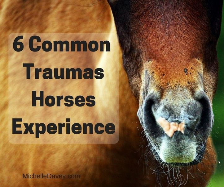 6 common traumas that could be affecting how your horse reacts to current events and impact their health.