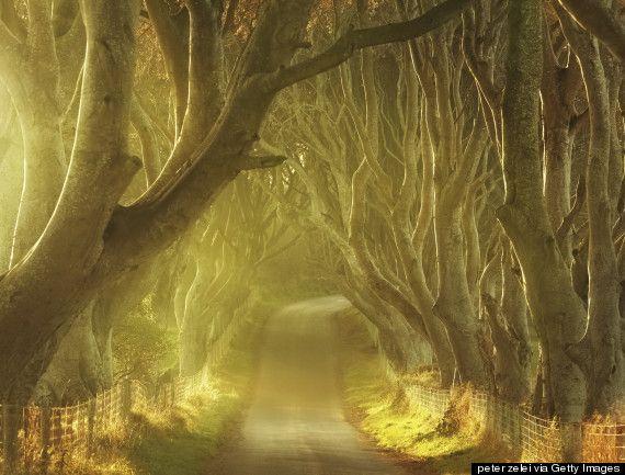 北アイルランドは1990年代末から、観光キャンペーンでこの道の画像を使い始めた。地元の人も観光客も「暗い生け垣」(The Dark Hedges)と呼ぶこの場所は、「ゲーム・オブ・スローンズ」の様々なシーンでも使われている。- HuffPost   神秘的で美しいアイルランドの道路