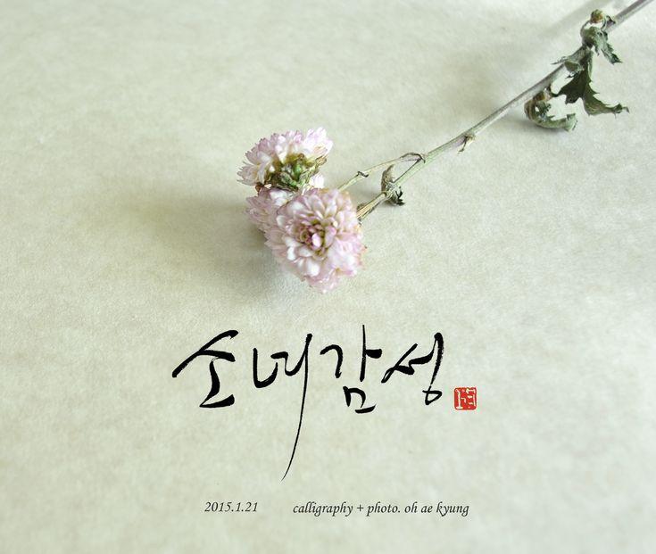 캘리그라피 + 꽃   calligraphy + photo. oh ae kyung