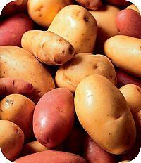 Bewaartips voor groenten en fruit in de koelkast, keuken of kelder  http://www.tuinadvies.nl/artikels/groenten_fruit_bewaartips.htm