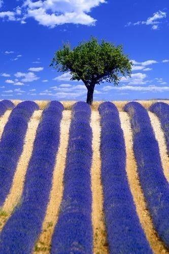 ღ  Provence, France