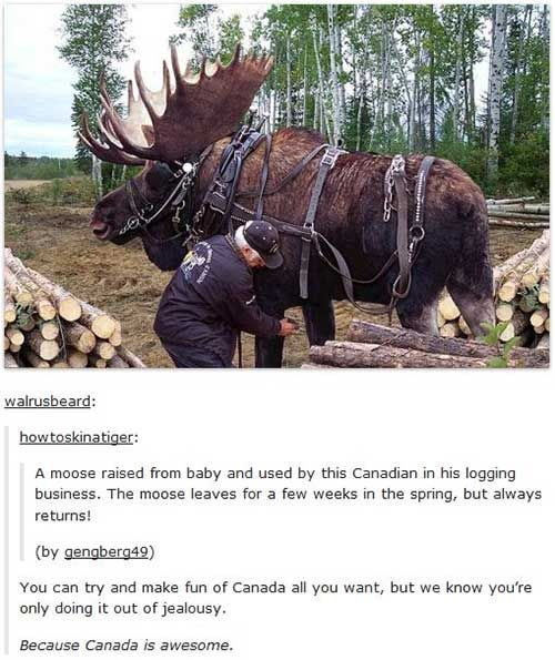 I am literally so proud to be Canadian rn