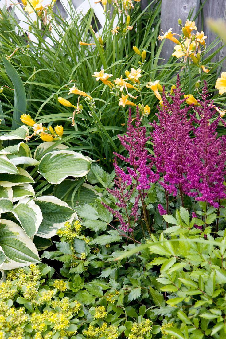 40 best hostas and images on pinterest | garden ideas, garden