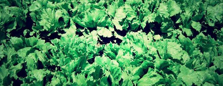 5 easy to grow greens herbs greens awesome beards