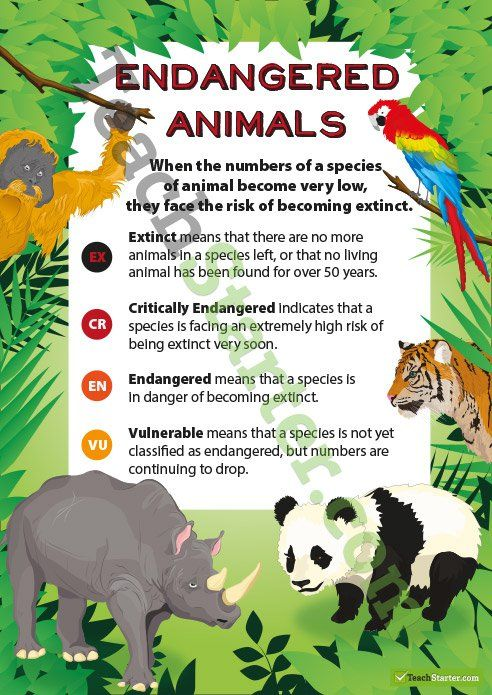 A poster explaining each of the classifications for endangered or extinct animals.