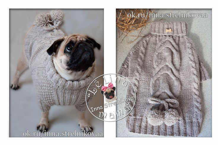 Knitted sweater for the dog breed pug #lhandmade
