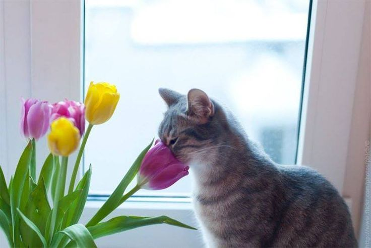 #gatos #flores www.xtremonline.com