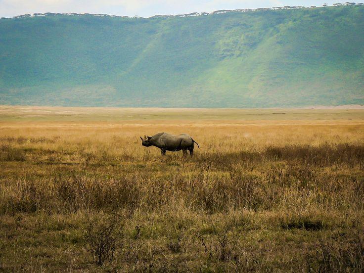 Rhino in Ngorongoro Crater World Heritage
