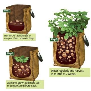 Tio Miguelito's Garden: Potato Growing Bags
