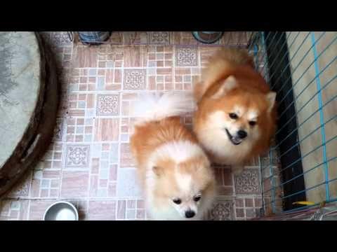Ciri Anjing Sehat - YouTube