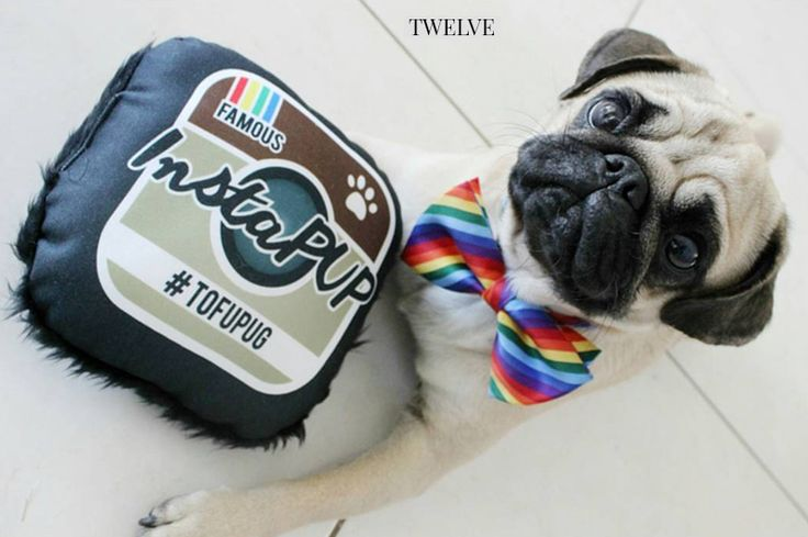 2017 Holiday Gift Guide for Pugs: The Play Maker http://www.thepugdiary.com/2017-holiday-gift-guide-pugs-play-maker/