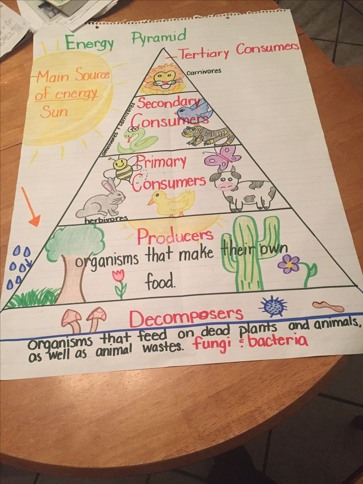 Food chain energy pyramid. 5th grade Science Science