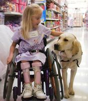 """Perhaps the most impressive gift canine assistant dogs provide is social rather than physical. When asked by a reporter what she liked most about her service dog, one recipient responded, """"My dog makes my wheelchair disappear."""""""