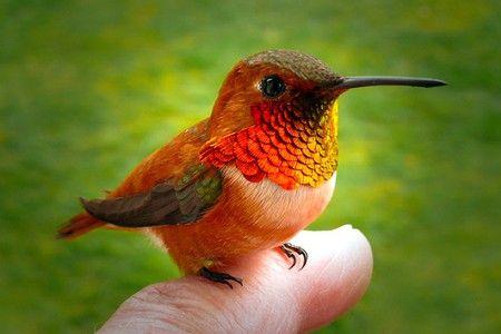 Hummingbird on a Finger - Sweet !