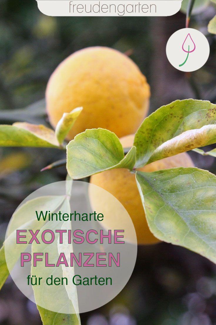 Exotische Pflanzen Im Garten In 2020 Exotische Pflanzen Gewachshaus Pflanzen Pflanzen