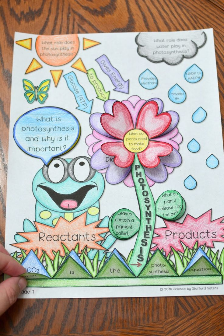 Photosynthesis Foldable Science Photosynthesis