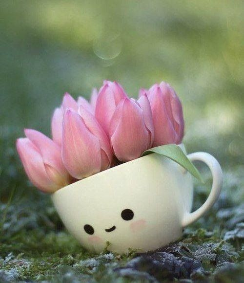 Tea With A Tulip Pinterest Planters Awesome