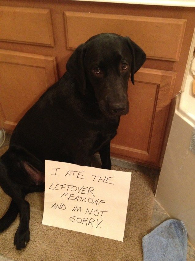 214 Best Images About The Best Of Dog Shaming On Pinterest