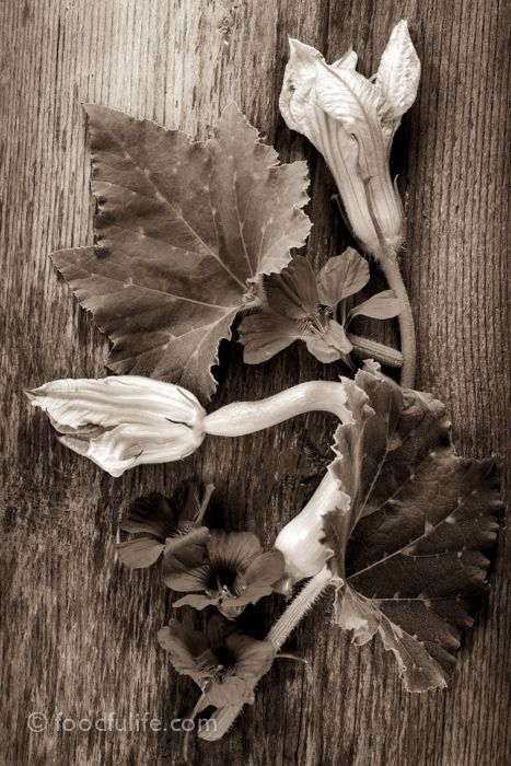 Courgette flower composition (black and white). Part of a personal project, published on foodfulife.com