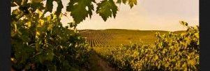 Adaptación vitivinícola al cambio climático, el caso de Grupo Príncipe de Viana - Area del Vino