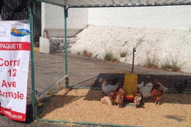 La intención es mostrar a productores del estado las ofertas de varias empresas encargadas de abastecer huertos y paquetes de aves de traspatio, informó el delegado estatal, Jaime Rodríguez López. ...