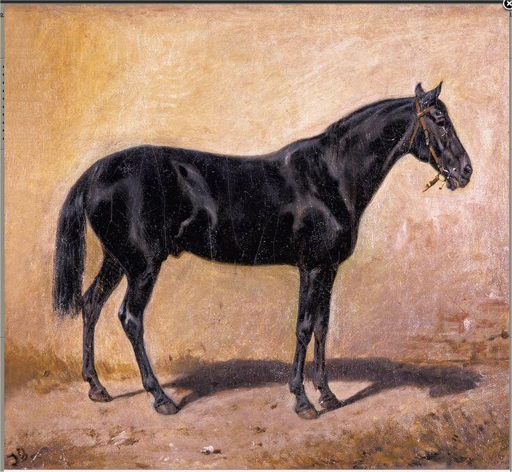 Studium karego konia
