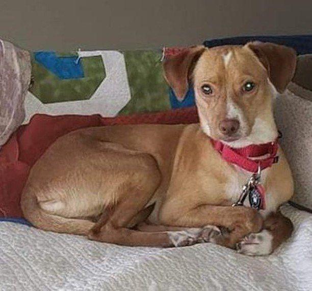 Think Lost Not Stray Losing A Dog Losing A Pet Pet Hacks