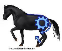 """Blog von www.fühlend-reiten.de: Verständnis von """"Vorwärts"""" in der Bewegung des Pferdes in Bezug auf die Ausbildung zur Tragfähigkeit"""