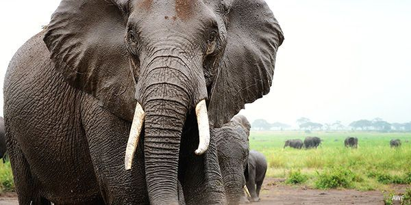 petitie: Tell Taiwan's Government: Save Elephants and Ban The Ivory Trade