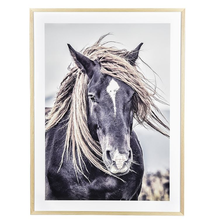 Mustang Sally Framed Print - Matt Blatt