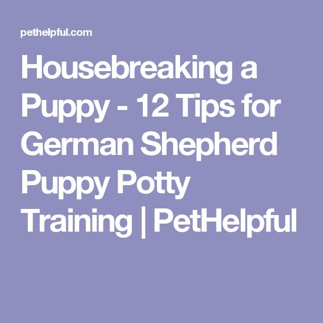 Housebreaking a Puppy - 12 Tips for German Shepherd Puppy Potty Training | PetHelpful