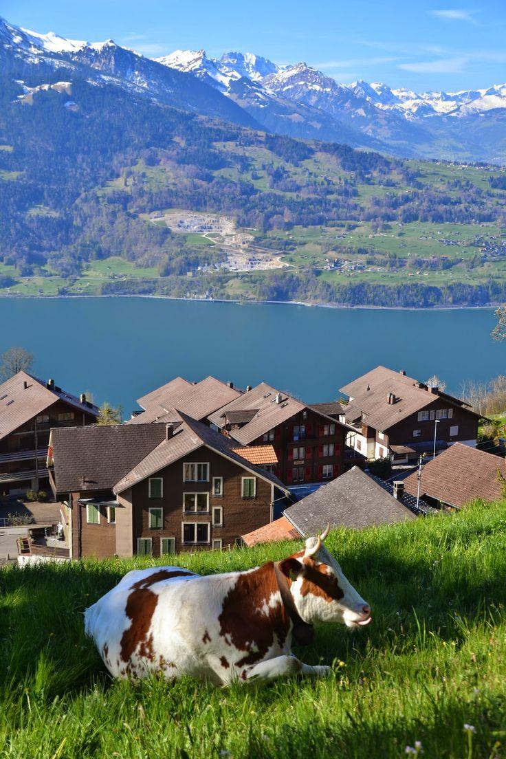 армении содержит швейцария быт образ жизни фото она