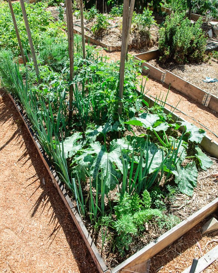 Plus de 1000 id es propos de potager sur pinterest for A propos du jardin