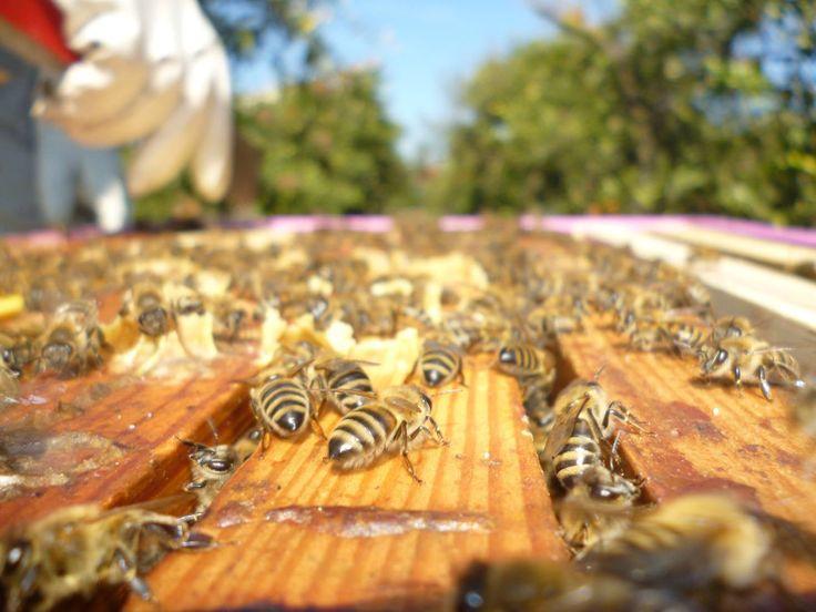 Το καλό ξεχειμώνιασμα των μελισσιών είναι το θεμέλιο για την γρήγορη ανάπτυξη την άνοιξη.