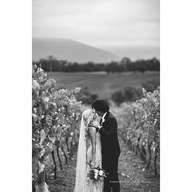 Killara Estate winery wedding in Yarra Valley. Bride wears long veil and Peter Trends bridal lace gown. Image by Vanessa Norris Photography.