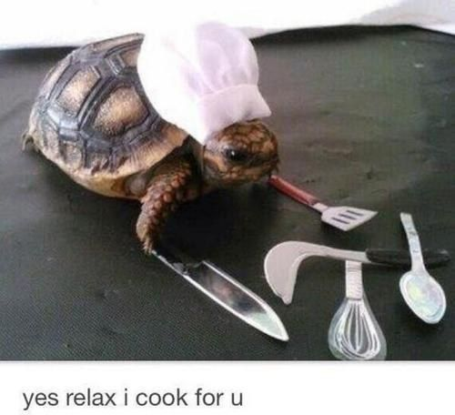 This tiny chef hat and kitchen utensils for this tortoise. | 23 Tiny Animals With Even Tinier Objects