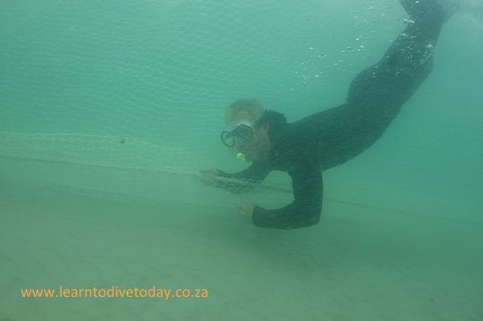 Murray dives down to check out the shark exclusion net at Fish Hoek beach