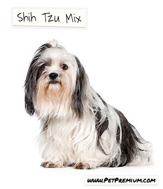 Like the Shih Tzu, the Shih Tzu Mix is a lap dog, they love to snuggle up and receive belly rubs. They are generally well-behaved, very affectionate and don't need a lot of exercise. The personalities of some mixes of the Shih Tzu are discussed in more detail below. The Shihchon: One of the most popular Shih Tzu Mix dogs today is The Shihchon, which is a cross between a Shih Tzu and a Bichon Frise. This unique mixture creates a lovely little dog breed that typically has the #ShihTzu's flat…