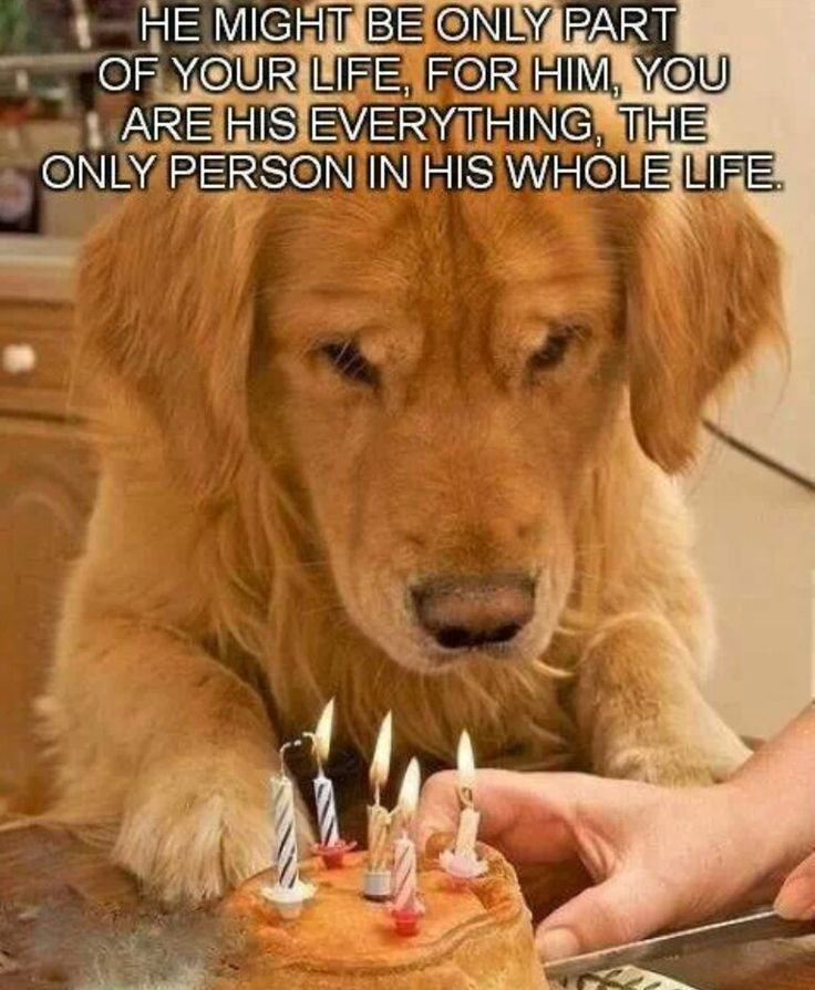 For all the pet owners out there, remember this...