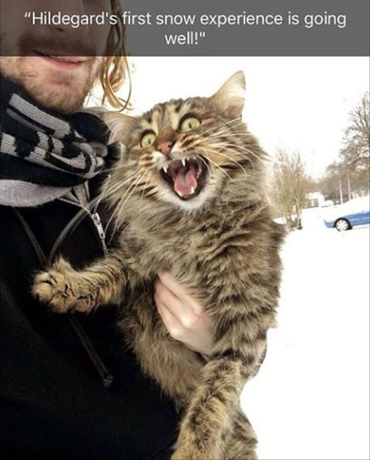 23+ Super Funny Animal Photos For Your Wednesday  #Funny