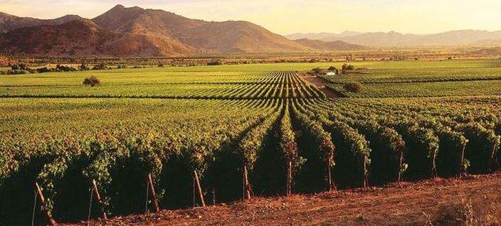 Casa Silva Hotel & Winery San Fernando, Colchagua Valley, Chile