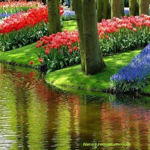 37 best Lake garden images on Pinterest | Flowers garden, Gardening