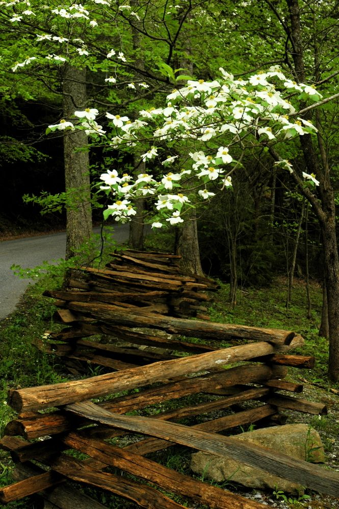 40 best smoky mountain springtime images on pinterest for Appalachian mountain cabins