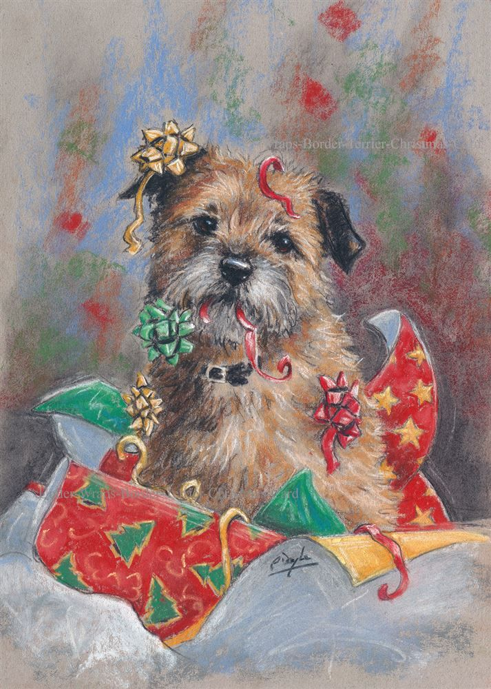 Border Terrier Pack of 10 Christmas Cards 'Under Wraps'  by Paul Doyle