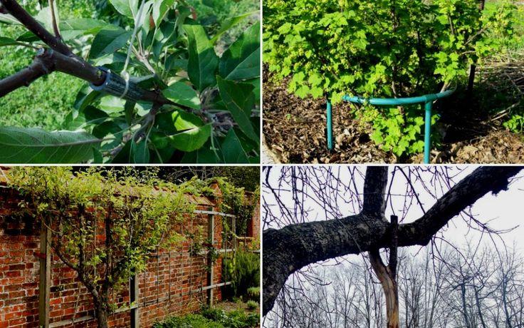 Подпорки для веток деревьев и кустов – какие бывают и как сделать самому | В саду (Огород.ru)