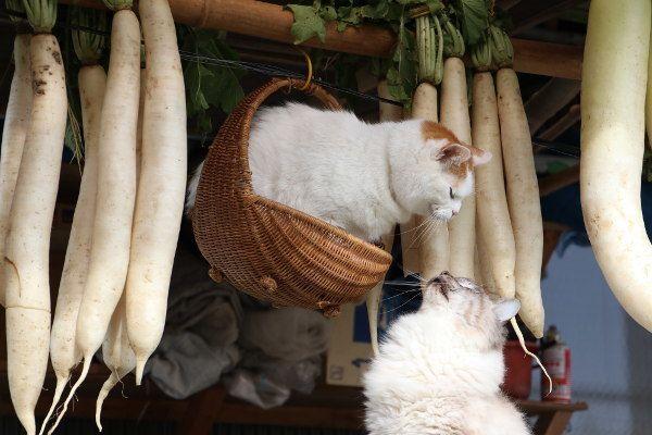 干し大根 - かご猫 Blog